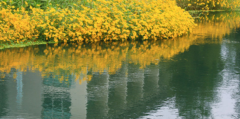 UC Merced - Flowers along a canal bank